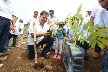 Más de 70 mil plantones sembrados por 20 mil voluntarios en todo el país